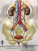 Bladder and Kidneys
