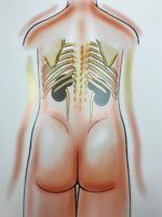 Placement of Kidneys