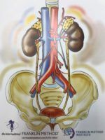 Kidneys, ureter, bladder